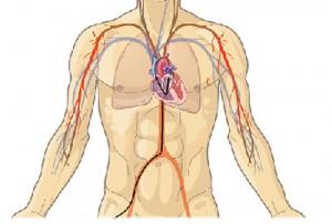 angiography-dryonash